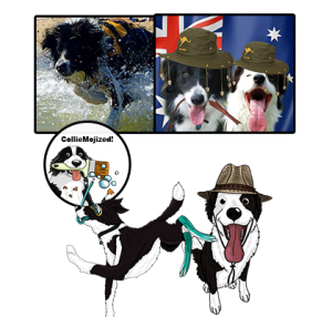 Billy the Border Collie and brother Biscuit cartoon colliemoji