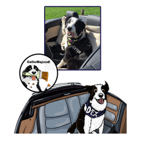 dexter border collie cartoon colliemoji