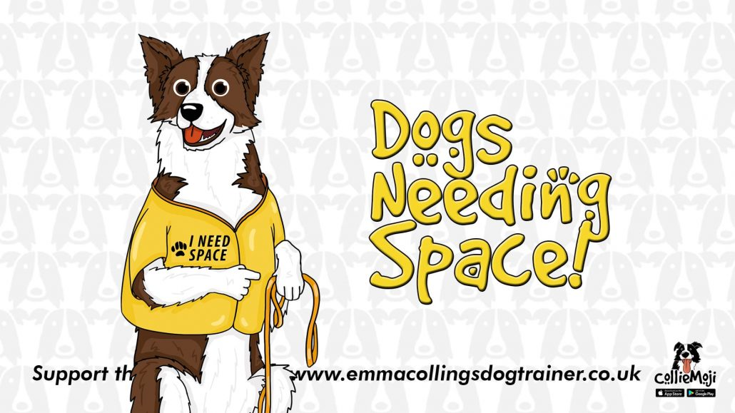 reactive dogs space need