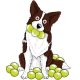 border collie sticker obsessive