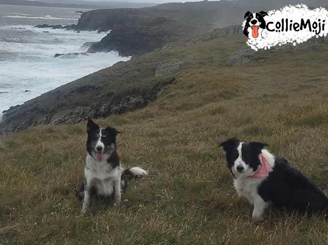 Border Collie Health – How to care