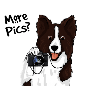 colliemoji photograph border collie