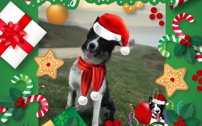 How to make a Christmas Photo with your Border Collie